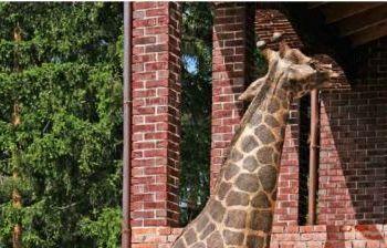 Жираф. частное владение